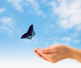 libertad-mariposa